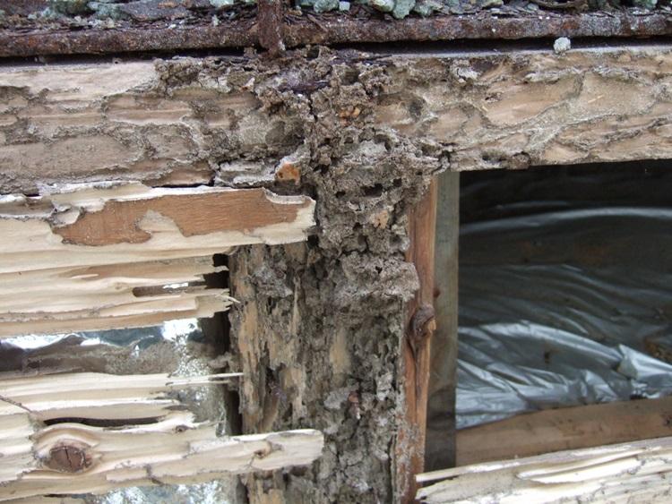 漏水+白蟻被害